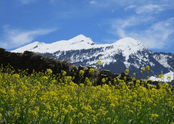 Ghangaria - Valley Of Flowers - Ghangaria